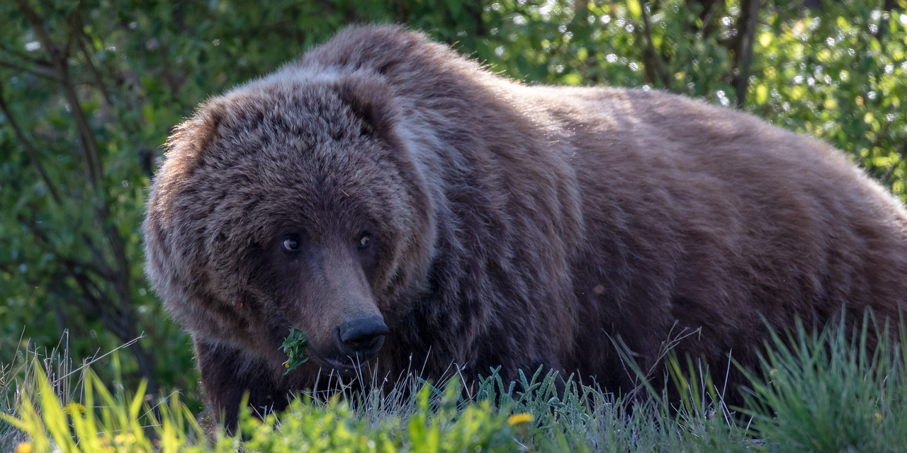 grizzly%20eyes-8101-X2.jpg