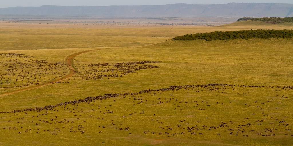 Wildebeest-on-the-Mara-7776-XL.jpg