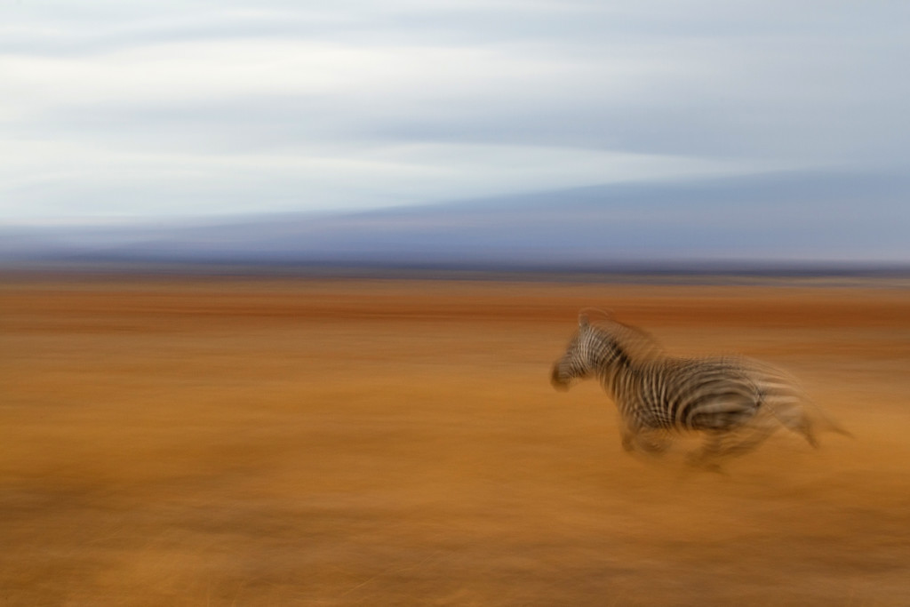 blurred-running-zebra-curved-XL.jpg